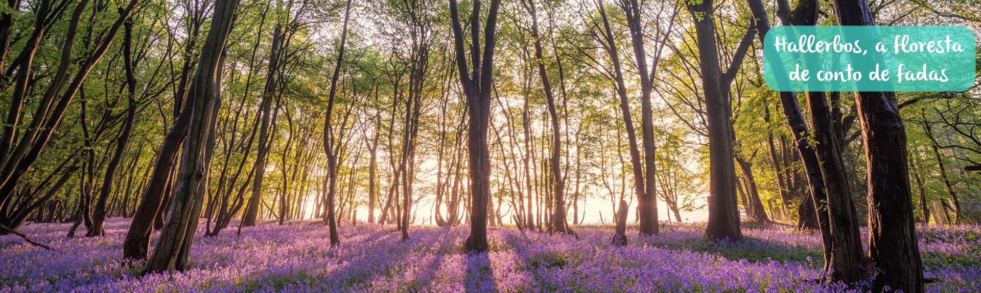 Lugares Curiosos – Hallerbos, a floresta de conto de fadas