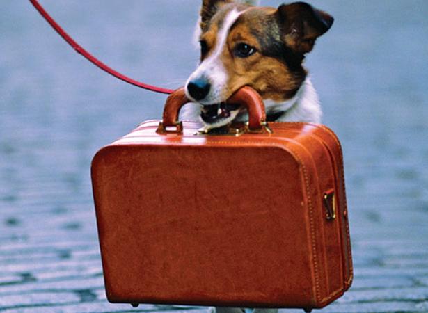 Tudo o que você precisa saber para viajar de avião com pets
